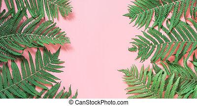 ボーダー, 葉, の, シダ, 上に, パステル, pink., 平面図, コピー, space., 夏, バックグラウンド。