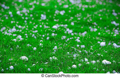 ボール, 現われる, 景色, イメージ, 浅い, 氷分野, 深さ, 緑, あられ, 嵐, 水晶, 薄片, 草, 風景, 後で