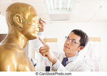 ポイント, 医者, モデル, 薬, 中国語, 人間, acupoint