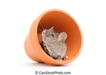 ポット, 白, マウス, 隔離された