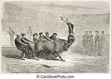 ポルトガル語, bullfighting