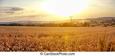 ポーランド, 日没, 風景