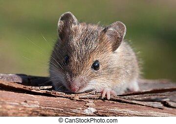 マウス, クローズアップ