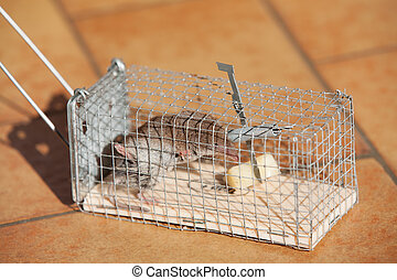 マウス, 捕えられた