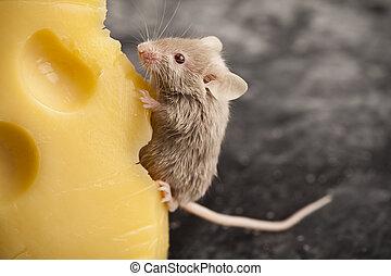 マウス, 背景, 田園, 鮮やか, カラフルである, 主題