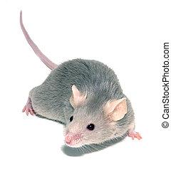 マウス, 3