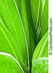 マクロ, の, 水滴, 上に, 新たに, 緑の葉