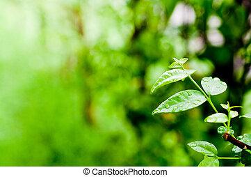 マクロ, 葉, 緑, 新たに