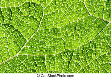 マクロ, 葉, 緑