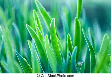 マクロ, photo., フォーカス, 緑の草, 柔らかい