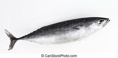 マグロ, 白い魚, 隔離された