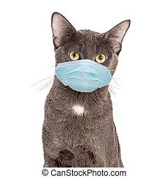 マスク, 身に着けていること, 外科, ねこ, 保護である, ペット