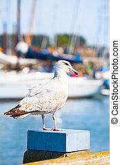 マリーナ, 海鳥, 光景