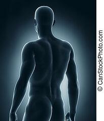 マレ, 解剖学, 後の視野