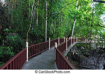マングローブ, 森林, 上に, 水, river.bridge