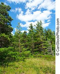 ミシガン州, -, 松, 森林地帯