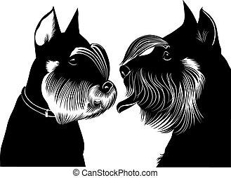 ミニチュア, 犬, schnauzer