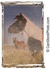 ミニチュア, horses., falabella