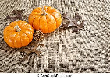 ミニ, pumpkins.
