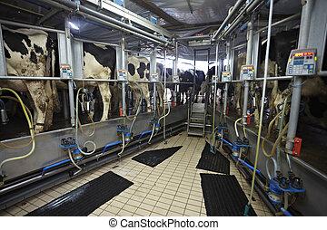 ミルク雌牛, システム, 搾り出すこと, 自動, 農場, 農業