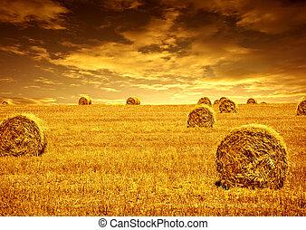 ムギの収穫, 時間