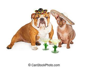 メキシコ人, ブルドッグ, mayo, de, ねこ, cinco, 毛のない