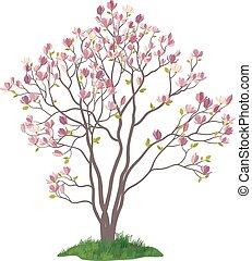 モクレン, 草, 木, 花