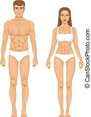 モデル, の, スポーティ, 人 と 女性, 地位, 前部, ビュー。, 別, 体, parts., ベクトル, イラスト