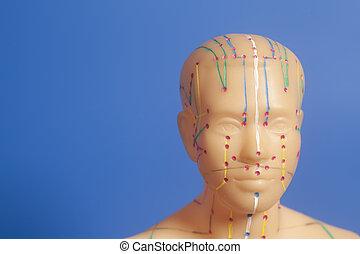 モデル, 人間, 医学, 刺鍼術