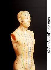 モデル, 刺鍼術, 人間, 医学