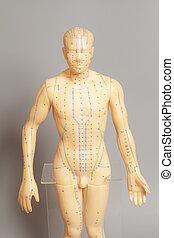 モデル, 医学, 人間, 刺鍼術