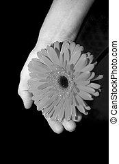 モノクローム, 花, 手
