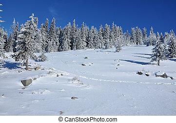 モミ, 山, 冬, 坂, 木, 風景