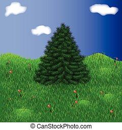 モミ, 美しい, 木, 牧草地, amon