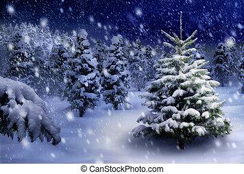 モミ, 雪が多い, 木, 夜