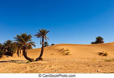 モロッコ, やし, オアシス, 砂漠