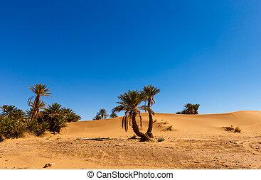 モロッコ, オアシス, パームデザート