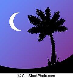 ヤシの木, night.