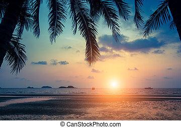 ヤシリーフ, トロピカル, 驚かせること, によって, 海, の間, 浜, sunset.