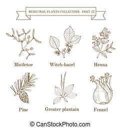 ヤドリギ, henna, より大きい, 引かれる, 型, 医学, witch-hazel, コレクション, 手, ハーブ...