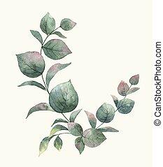 ユーカリ, ベクトル, 花束, 水彩画, 葉, 緑, branches.
