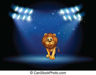 ライオン, ステージ, 中心, スポットライト