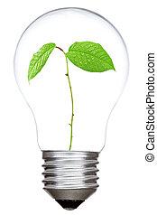 ライト, 中, 緑, 電球, 芽