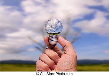 ライト, 処理, 木, 死んだ, 手の 保有物, 写真, bulb.