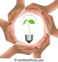 ライト, 植物, 中, 電球, 手