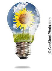 ライト, 米, 電球, 水田