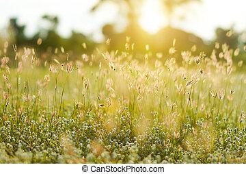 ライト, 草, 日没