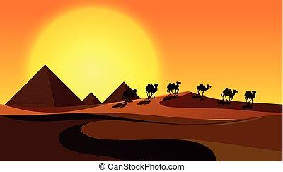 ラクダ, シルエット, 現場, 砂漠