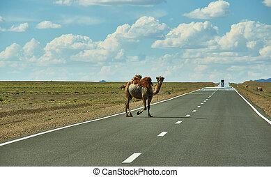 ラクダ, 交差点, ハイウェー