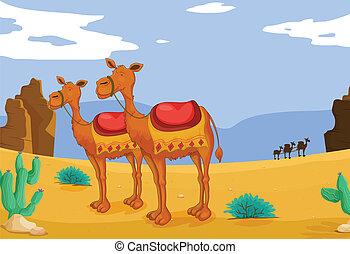 ラクダ, 砂漠